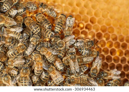 Hardworking bees on honeycomb in apiary - stock photo