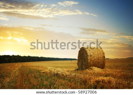 Harvest concept - stock photo