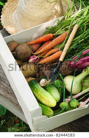 Harvest of fresh vegetables, hat and small trowel - stock photo