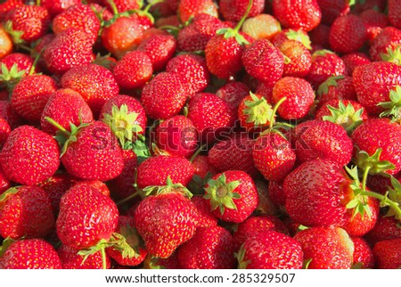 Harvest ripe tasty juicy sweet strawberries - stock photo