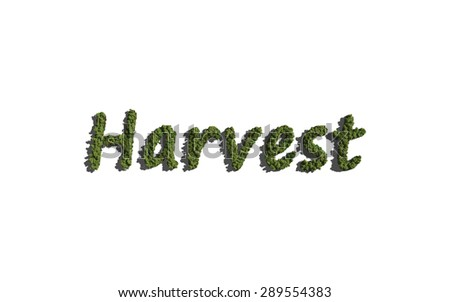 harvest text tree with white background concept of typography - stock photo