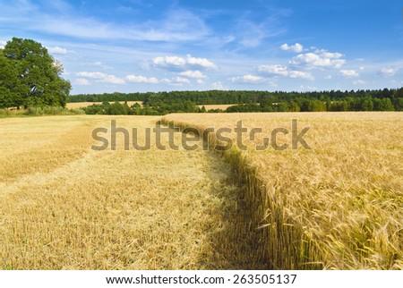 Harvest time - stock photo