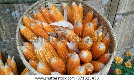 Harvested corn in a basket - stock photo