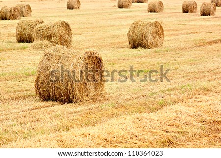 Harvested field with big yellow straw bales - stock photo