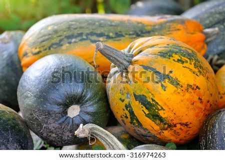 Harvested pumpkins on a field - stock photo