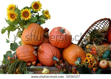 Harvested pumpkins on Halloween - stock photo