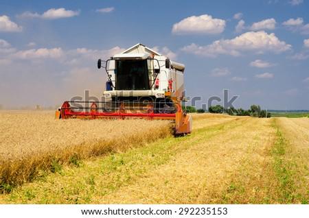 Harvester combine harvesting wheat on sunny summer day. - stock photo