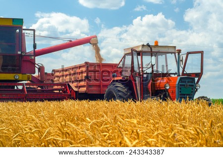 Harvester combine, tractor and trailers during wheat harvest on summer day. - stock photo