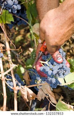 harvesting - stock photo