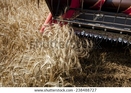 harvesting - stock photo