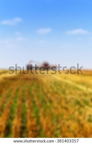 harvesting , defocus, - stock photo