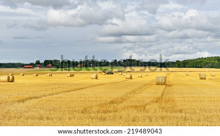 Harvesting. Fields of Gold and bales of hay. Sweden - stock photo
