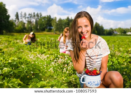 Harvesting girl on the strawberry field. Focus on her and behind group of girls, she look toward camera, horizontal format - stock photo