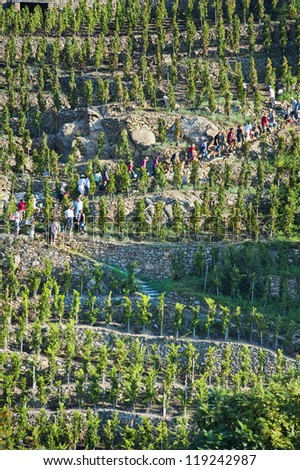 Harvesting on the Terraces in a Vineyard at Ampuis France - stock photo