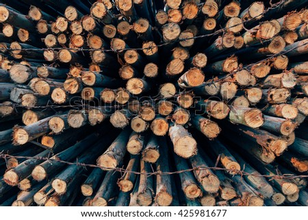 Harvesting timber logs in a forest - stock photo