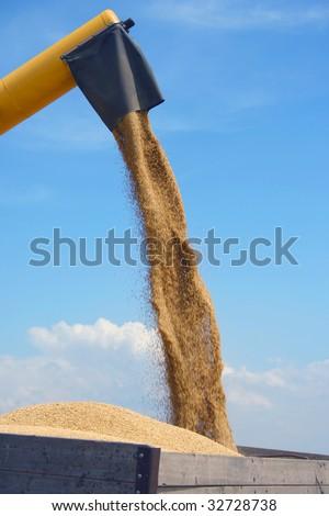 harvesting wheat - stock photo