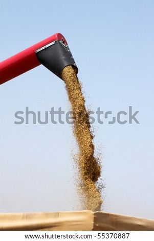 harvesting wheat - stock photo
