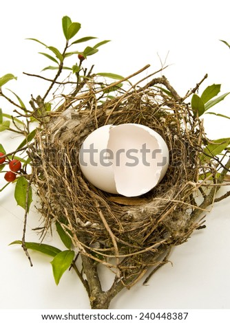 Hatched Egg In Bird's Nest/ Broken Egg Shells In Nest/Concept of finance, broken personal savings, retirement or investment.  - stock photo