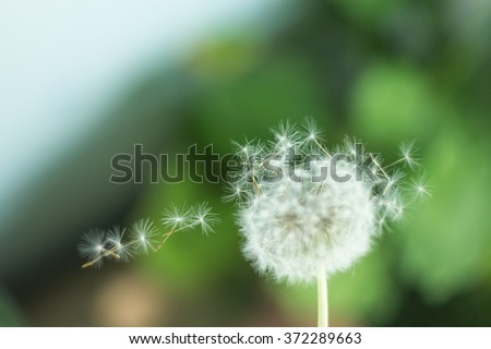 hats flying dandelion in the wind - stock photo