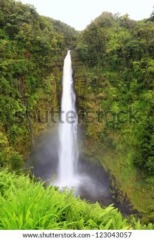 Hawaii Akaka Falls - Hawaiian waterfall on Big Island. Beautiful pristine nature landscape scene showing the famous waterfall, Akaka falls in lush scenery. - stock photo