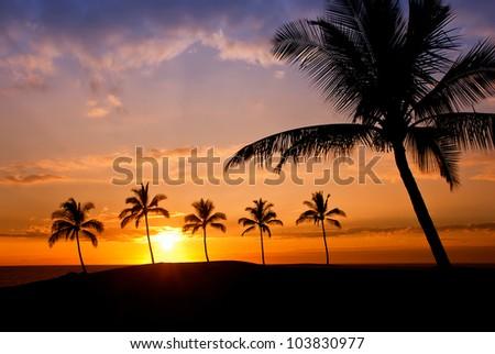 Hawaiian palm tree sunset on Big Island - stock photo