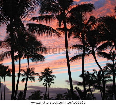 Hawaiian Punch. Palm Paradise at Sunset - stock photo