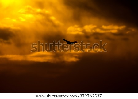 hawk flying and storm long legged buzzard and storm - stock photo