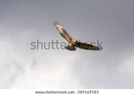 hawk flying long legged buzzard - stock photo