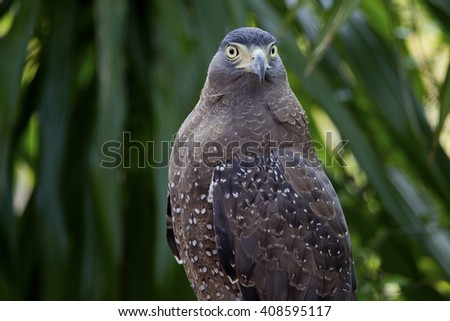 Hawk is similar to the Eagle The birds of prey as well. But the Hawks are smaller Is there a hooked beak. high And have very good eyesight - stock photo