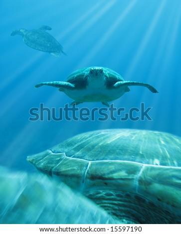 hawks-bill turtles under water - stock photo