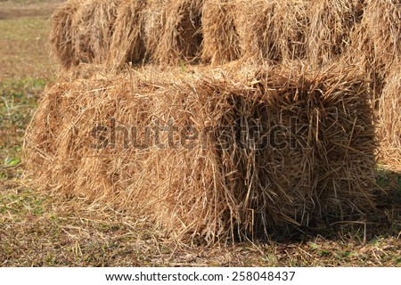 hay and straw bales in the end of summer - stock photo
