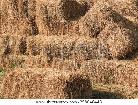 hay and straw bales in the end of summer-3 - stock photo