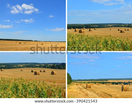 Hay and straw bales on farmland under blue sky in summer day. - stock photo