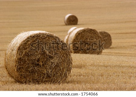 Hay bails in field - stock photo