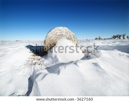 Hay bale in snow covered field with a blue sky in the background. - stock photo