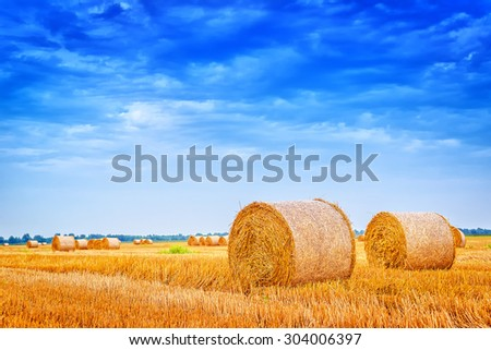 Hay bale rolls in cultivated field after wheat harvest, cloudy summer day, vintage retro toned image - stock photo
