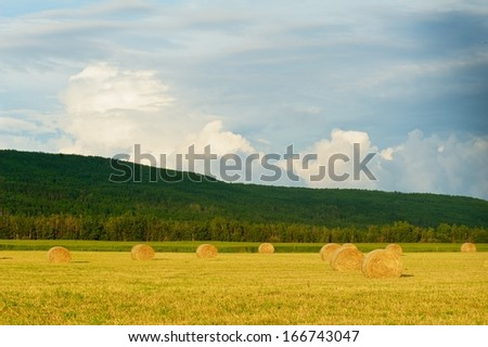 Hay bales at sunset with rain clouds in the background  A hill covered with aspen trees behind - stock photo