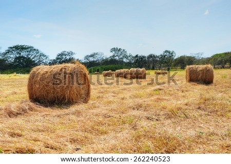 Hay bales in a pasture field with a nice blue sky - stock photo