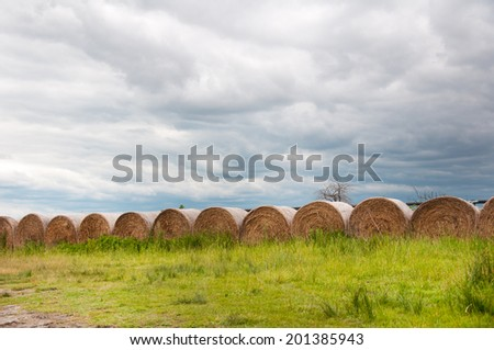 hay bales in a row on the field on a gloomy day - stock photo