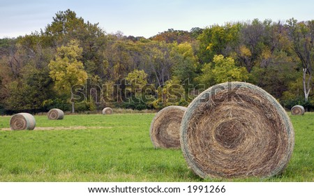 Hay bales in autumn field - stock photo