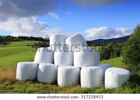 Hay bales packed in white plastic in Norway. Agricultural area in the region of Oppland. - stock photo