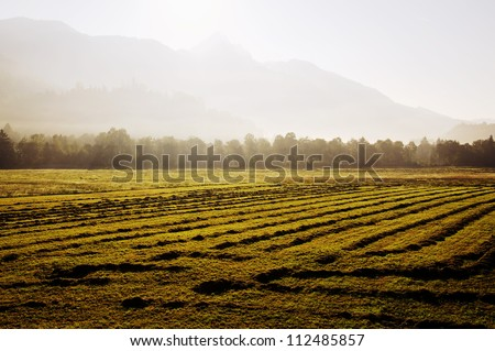Hay drying in the morning sun near Mount Wendelstein in the Bavarian Alps - stock photo