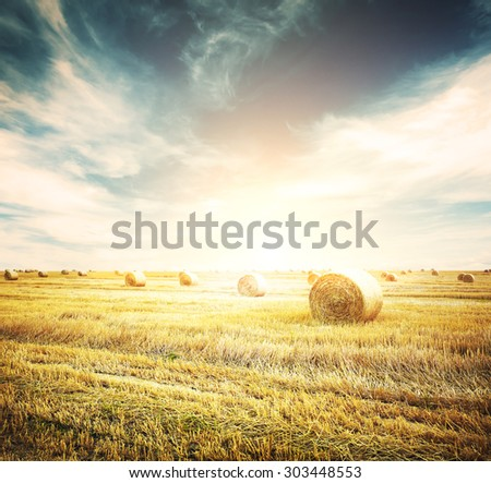 hay-roll on meadow against sunset background  - stock photo
