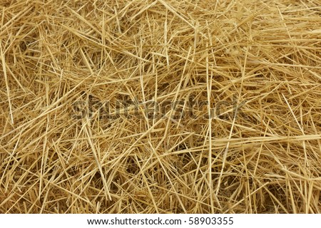 hay, ?straw in the field - stock photo