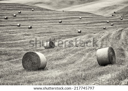haybales at a field - photo - stock photo