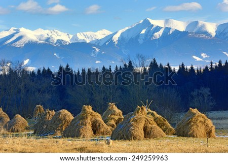 haystack's on meadow against Tatra Mountains background in Slovakia - stock photo