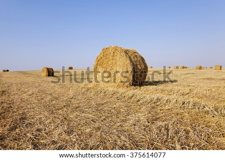 haystacks straw lying in the agricultural field after harvesting cereal - stock photo