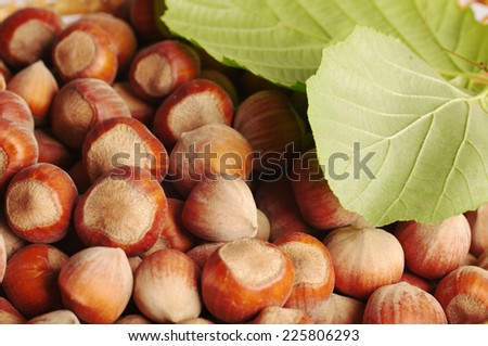 Hazelnuts, filberts in shells and green leaves. - stock photo