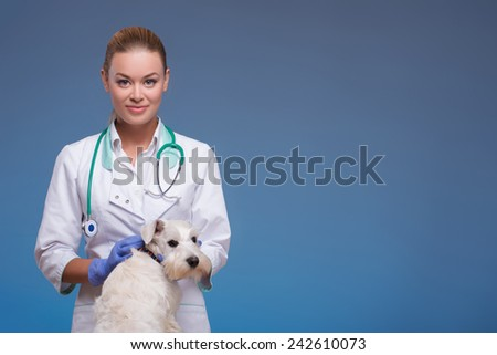 He gets along so well. Portrait of a young beautiful vet examining cute white dog sitting and looking from behind on the table against blue background - stock photo