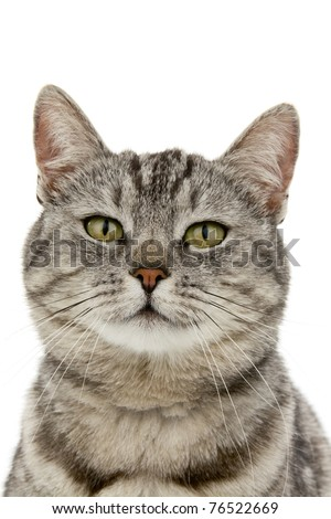 Head cat, on white background - stock photo